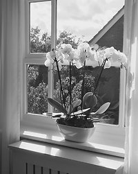 About Me. orchids